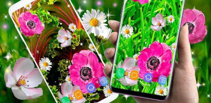 Pink Flower Live Wallpaper 🌺 Parallax Wallpapers apk