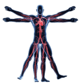 Anatomy & Physiology of The Human Body Icon