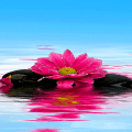 Shiny Pink Flower LWP Icon