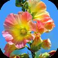 Imágenes de flores Icon