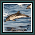 Live Wallpapers – Dolphins Icon