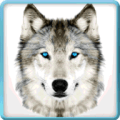 Ultimate Wild Wolf Simulator Icon
