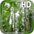 Birch Forest LWP Free Icon