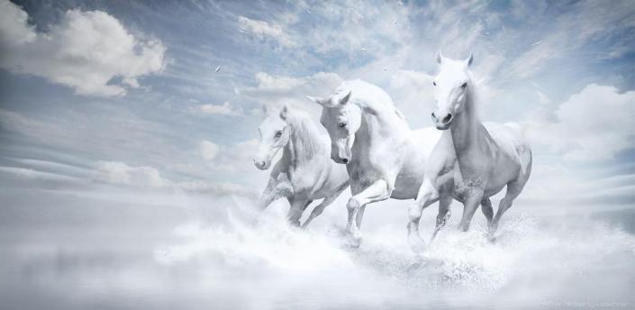 Horse Racing Live News apk