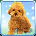 Talking Teddy Dog Icon