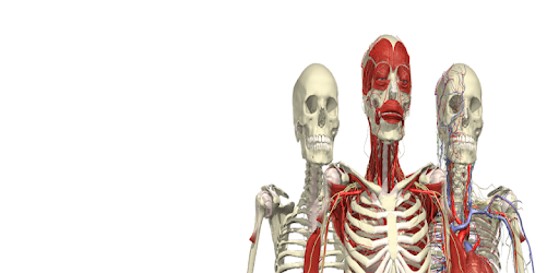 Anatomy & Physiology of The Human Body apk
