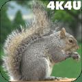4K Park Squirrel Video Live Wallpaper Icon