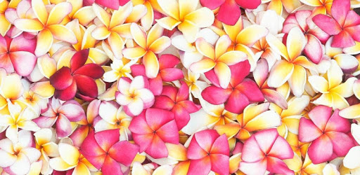 Flowers and Roses Images Gif apk