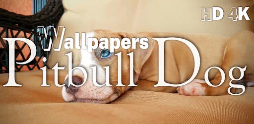 Pitbull Dog Wallpapers HD 2019, Dog Wallpapers apk