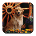 Dog - HD Wallpapers Icon