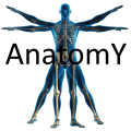 human anatomy physiology atlas Icon