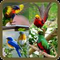 Animated Birds GIF Icon