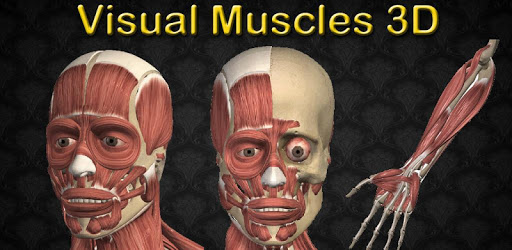 Visual Muscles 3D apk