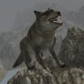 Real Wolf Simulator Icon