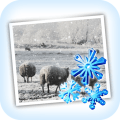 Snow Daze Icon