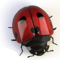 Beetle and Eggs Icon