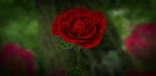 3D Rose Live Wallpaper apk