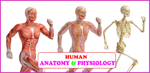Human Anatomy and Physiology: With Illustrations apk