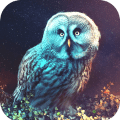Owl Wallpaper HD Icon