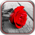 Red Roses Live Wallpaper Icon