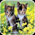 Kitten HD Wallpaper Icon