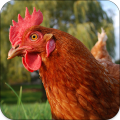 chicken sounds Icon