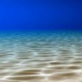 Under the Sea Live Wallpaper Icon