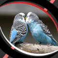 Live Wallpapers - Love Birds Icon
