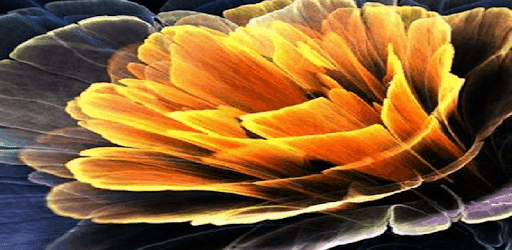 Animated Flower Live Wallpaper Theme Background apk