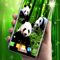Panda Parallax Wallpapers Icon