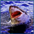 Shark Attack Beach Survival 3D Icon