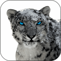 Snow Leopard Video Wallpapers Icon