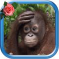 Monkey Animated Pictures Icon