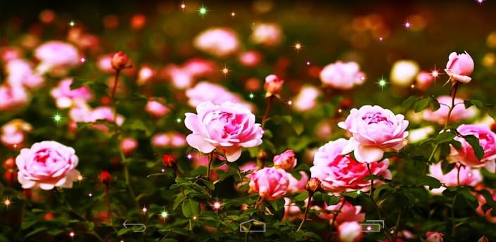 Flower Roses Wallpaper apk