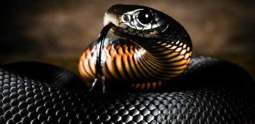 Snake Live Wallpaper : 7fon & LWP apk
