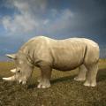 Wild Rhino Family Jungle Simulator Icon