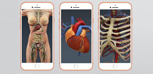 Human Anatomy And Physiology apk