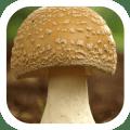 brown mushroom food theme Icon