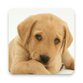 Find Dog Breeds Icon