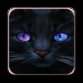 Cat Cute Icon