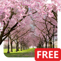 Spring Cherry Blossom Live Wallpaper FREE Icon