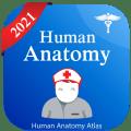 Human Anatomy Atlas - Anatomy Learning 2021 Icon