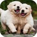 Labrador Wallpapers: backgrounds hd Icon