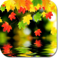 Fallen Leaves HD Wallpapers Icon