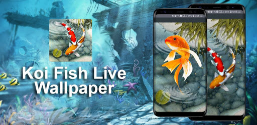 KOI Fish Live Wallpaper : New Fish Wallpapers 3d apk