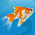 AquaLife 3D Icon