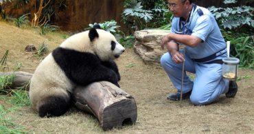動物行為訓練師│吳乃江 建立人與動物的信任感-香港海洋公園