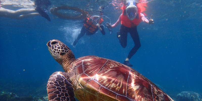 菲律賓.APO島|阿波島看海龜 體驗被海龜環繞的滋味
