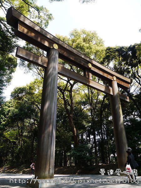 【東京景點】澀谷區 明治神宮。參拜人氣NO.1神社。跟著在地人朝聖啦!