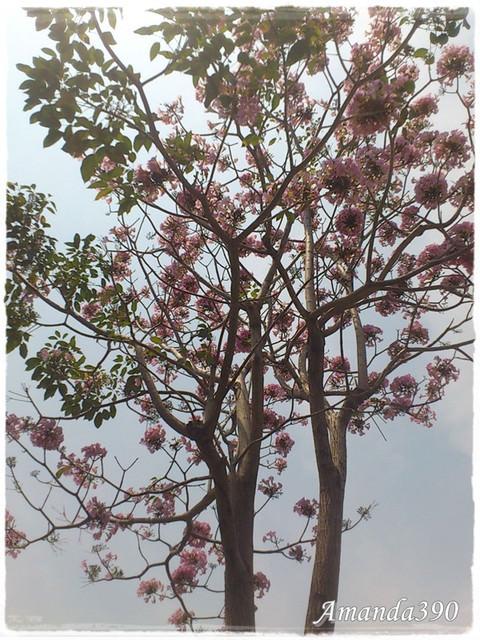 【台南美食】櫻桃木 Cherrywood。台南東區 (已歇業)